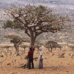 D. Gary Young and a Frankincense harvester in northern Africa, near the Arabian Peninsula